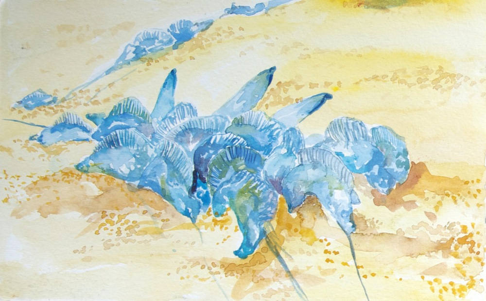 watercolor, ink , jelly fish washed on shore.jpg