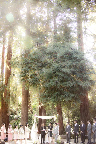 Chuppah under the redwoods