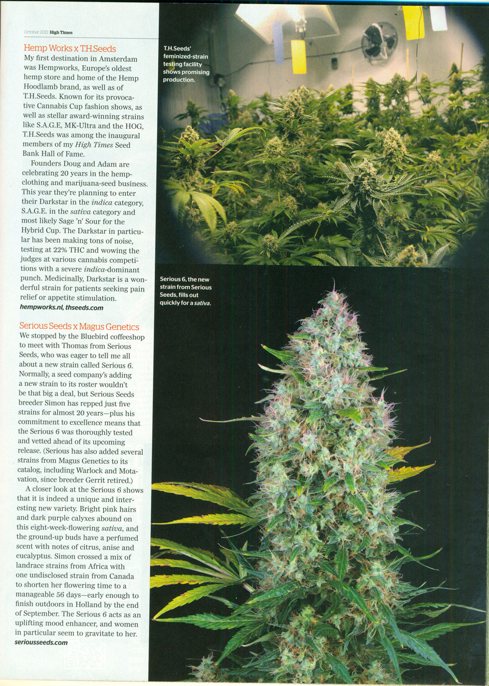 High-Times-October-2013CCup-Preview_1.jpg