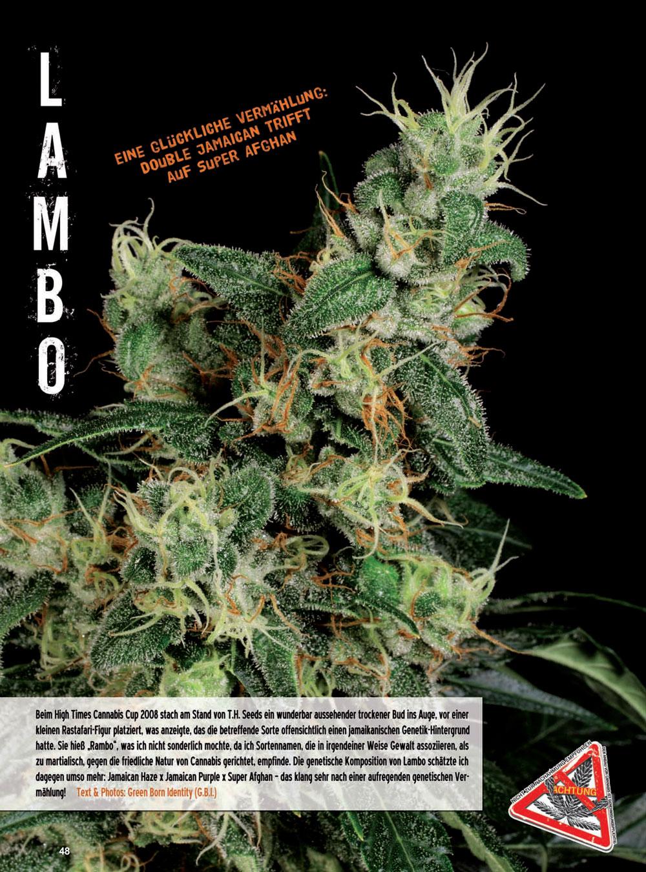 LAMBO_THSeeds-201201-1.jpg