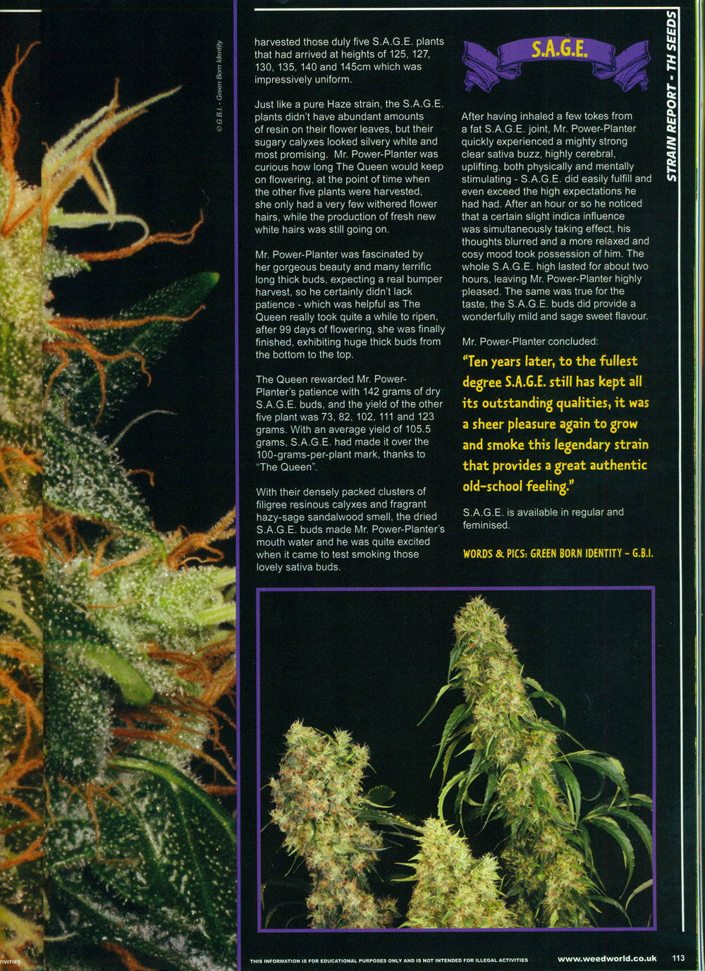 weedworld_2012_p5.jpg