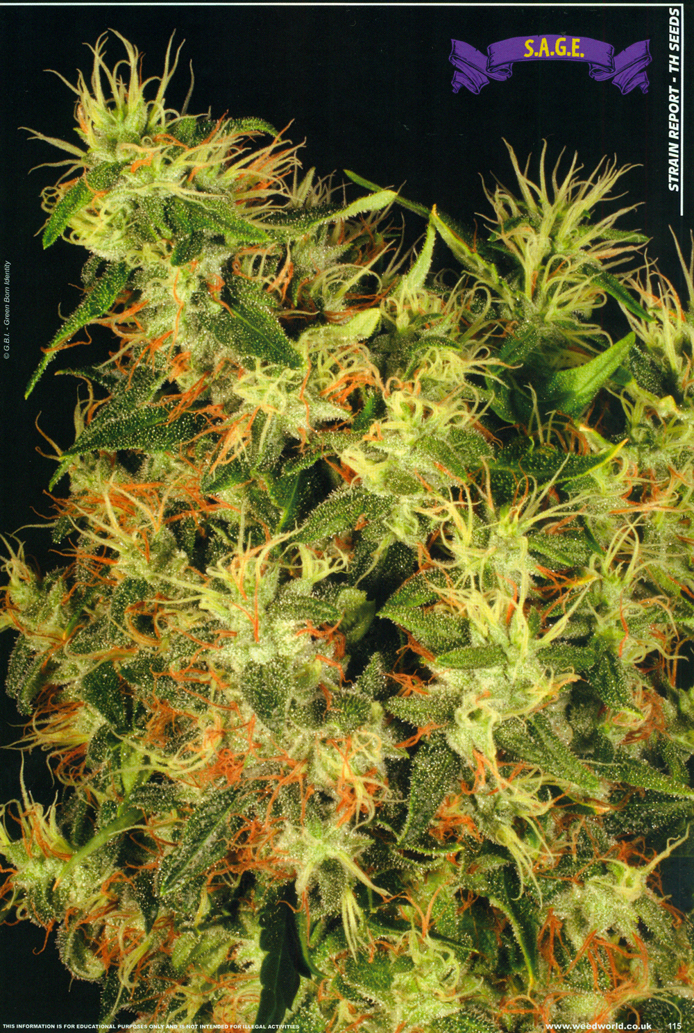 weedworld_2012_p7.jpg