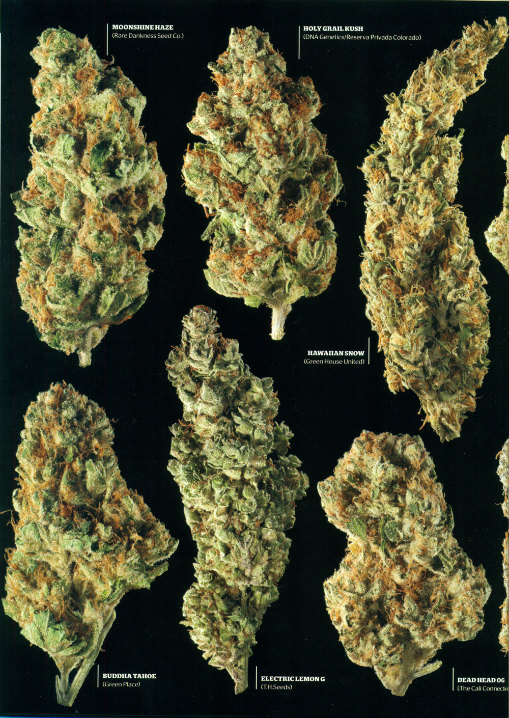 hightimes_april2012_p5.jpg