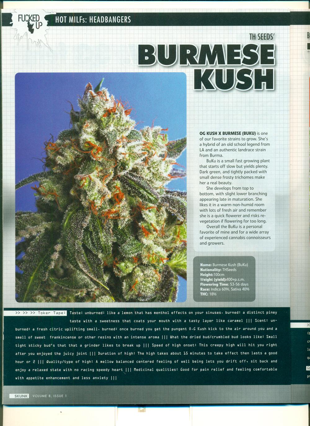 SKUNK-magazine-sept2012-MILF-BUKU.jpg