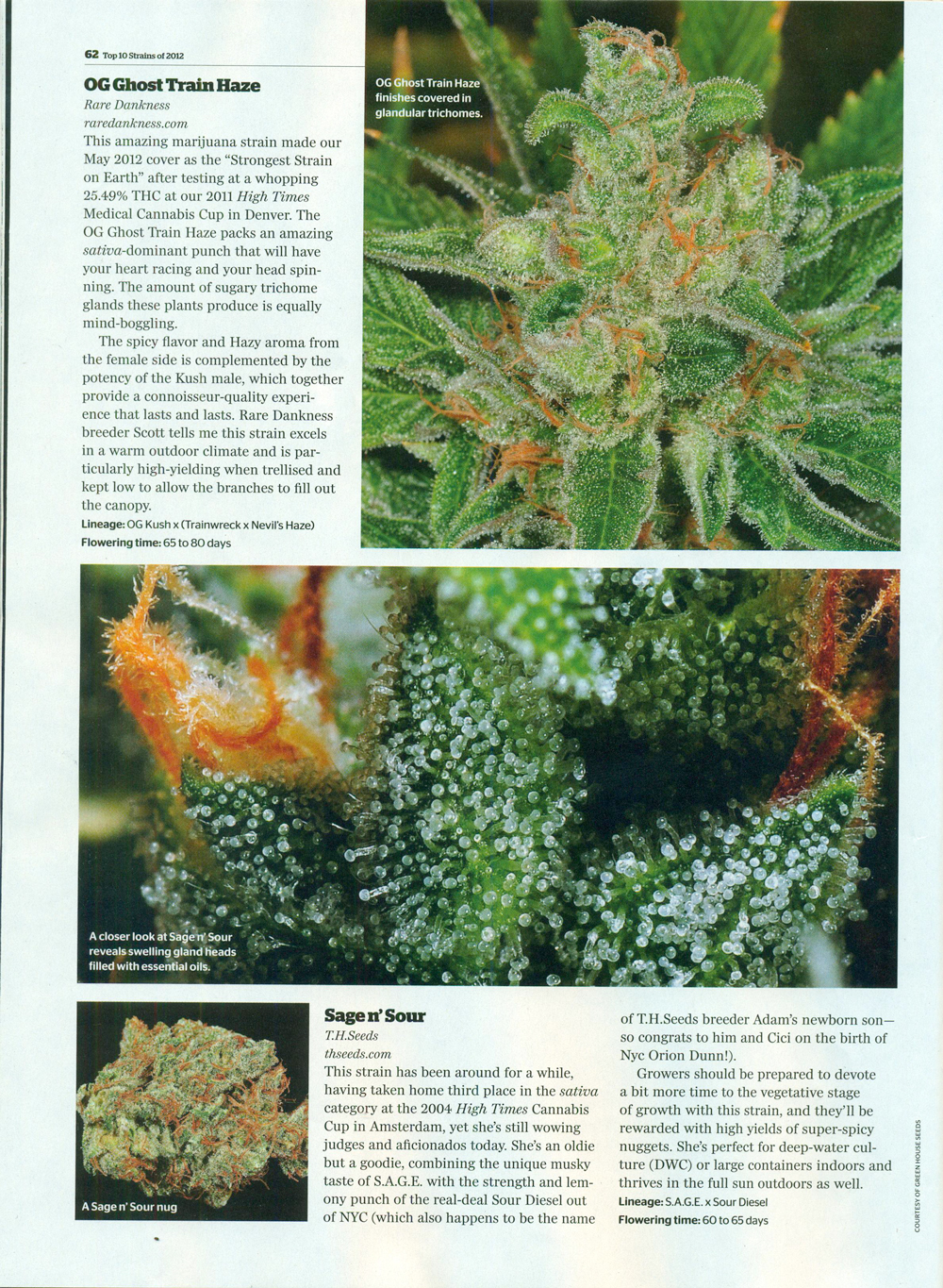 Hightimes-top-10-strains-2012-sage-n-sour-article.jpg
