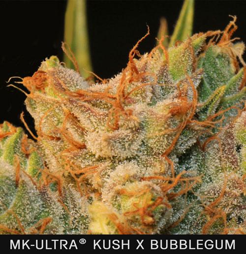 MK-BUBBLE.jpg