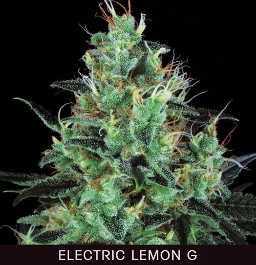 ELECTRIC-L.jpg