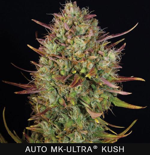 AUTO-MK1.jpg