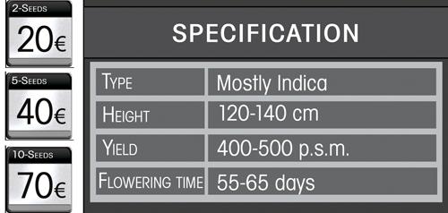 Auto MK-Ultra-Specf.jpg