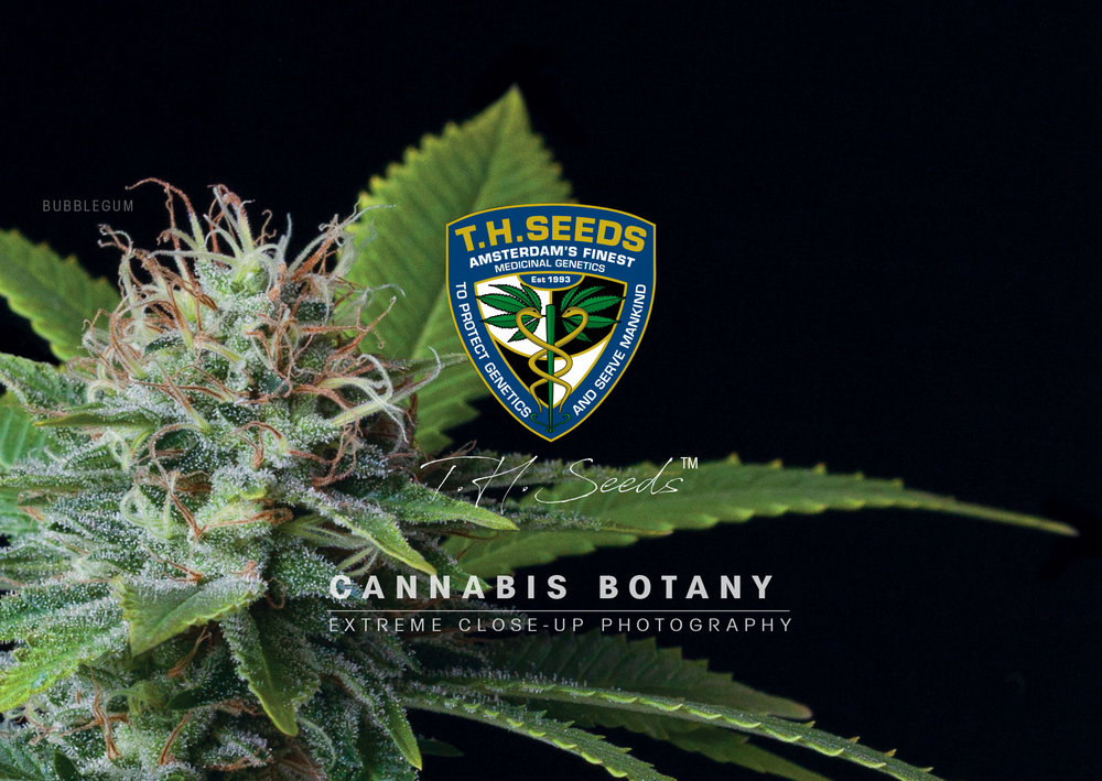 Cannabis-Botany-cover1-online-book.jpg