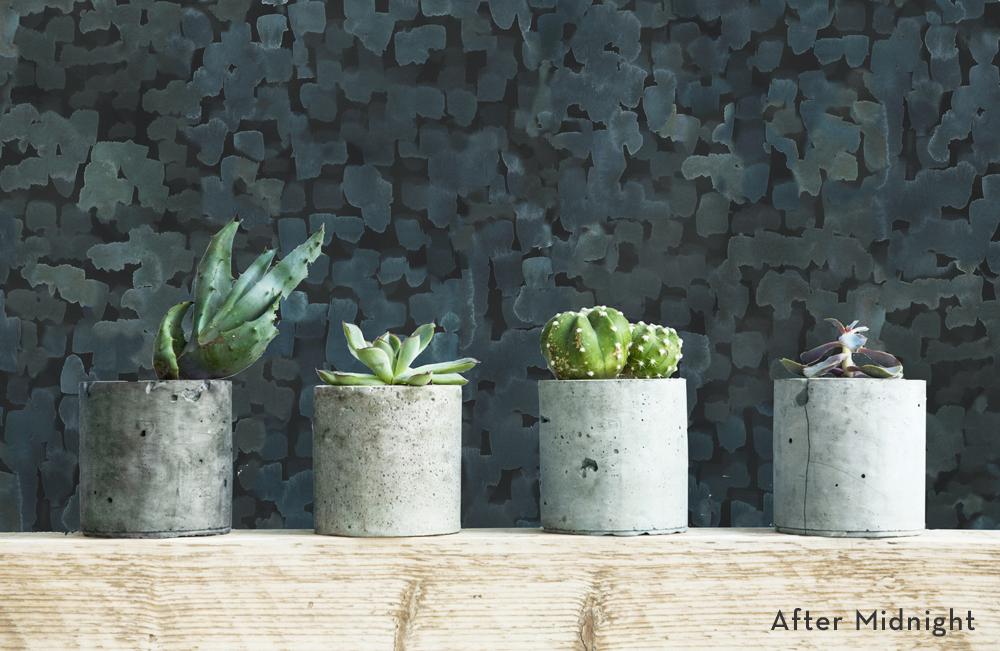 aftermidnight-Institu-succulents-title.jpg