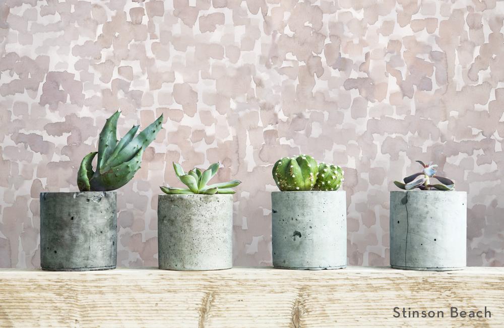 stinsonbeach_institu_succulents-title.jpg