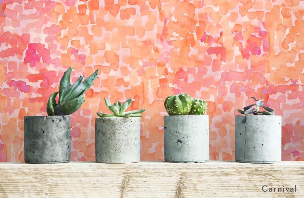 carnival_INSTITU_succulents-title.jpg