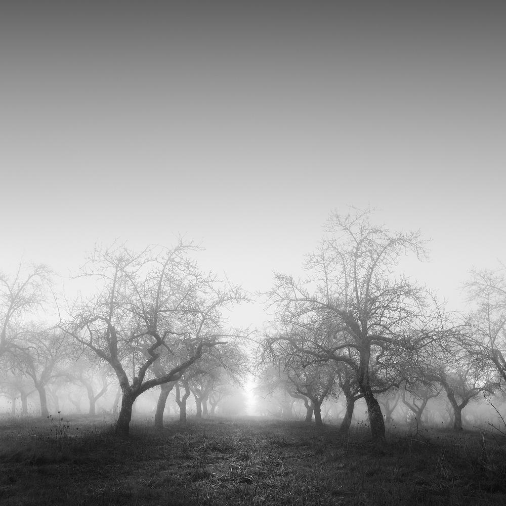 Trees of Mystery 1.jpg