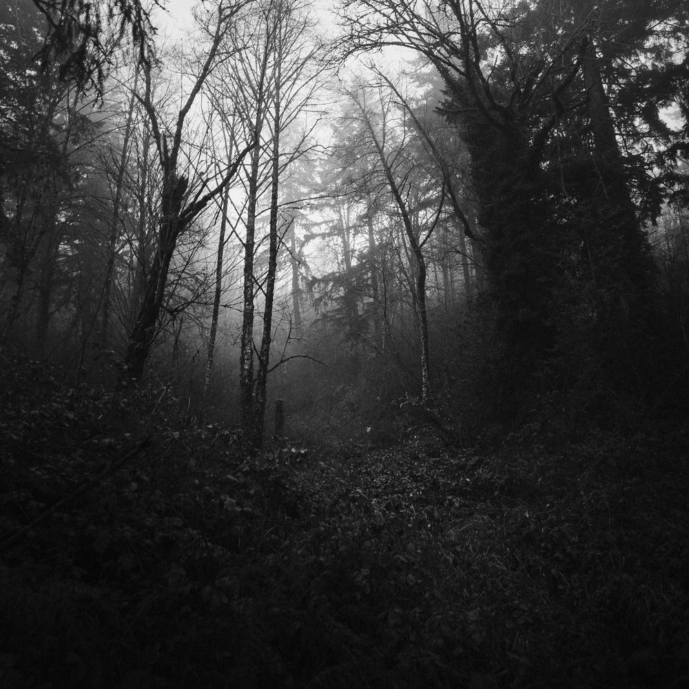 Trees of Mystery 2.jpg