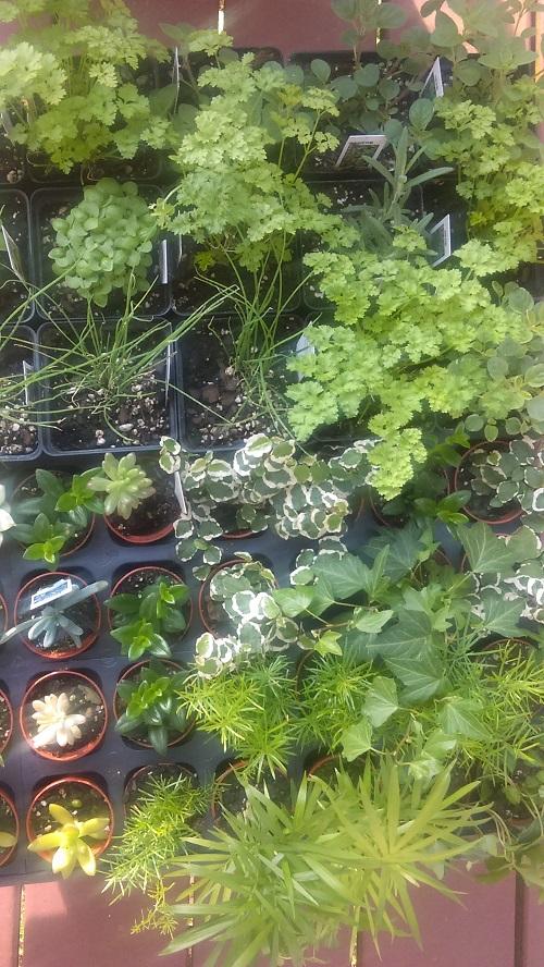 Herbs - Copy.jpg