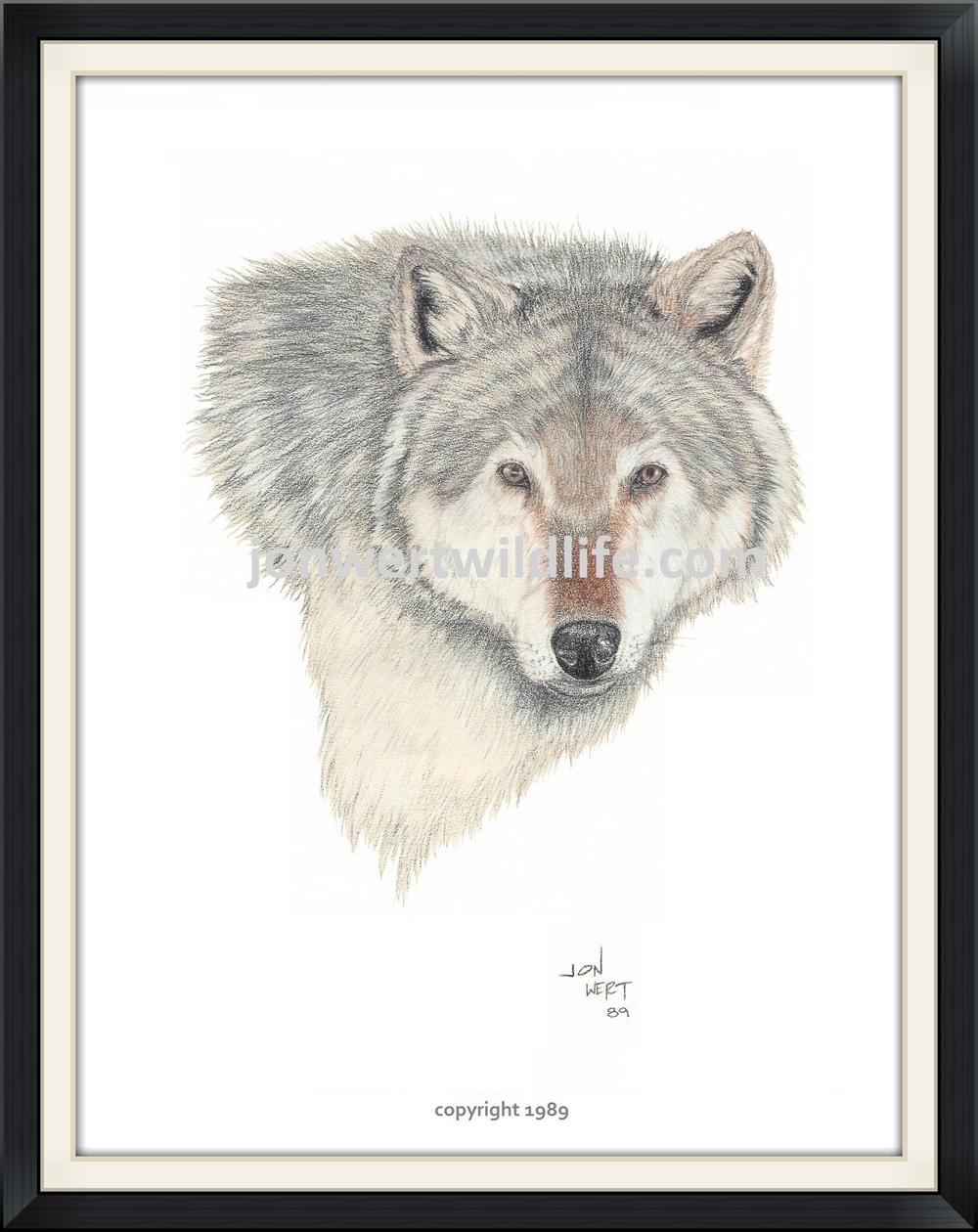WOLF FACE  - Copy.jpg