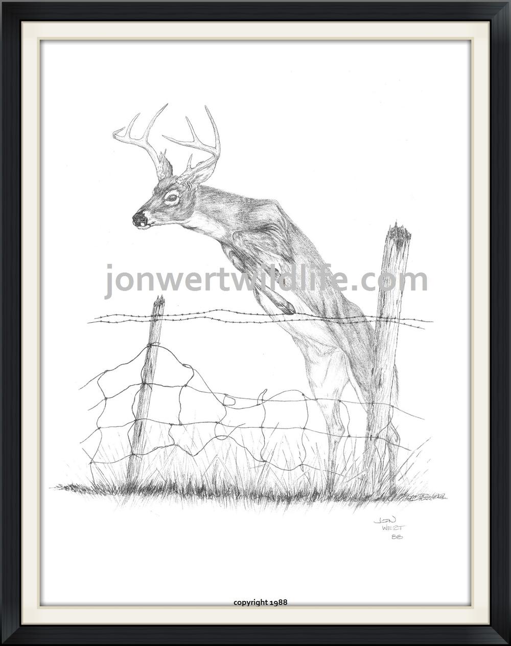 Buck jumping fence.jpg