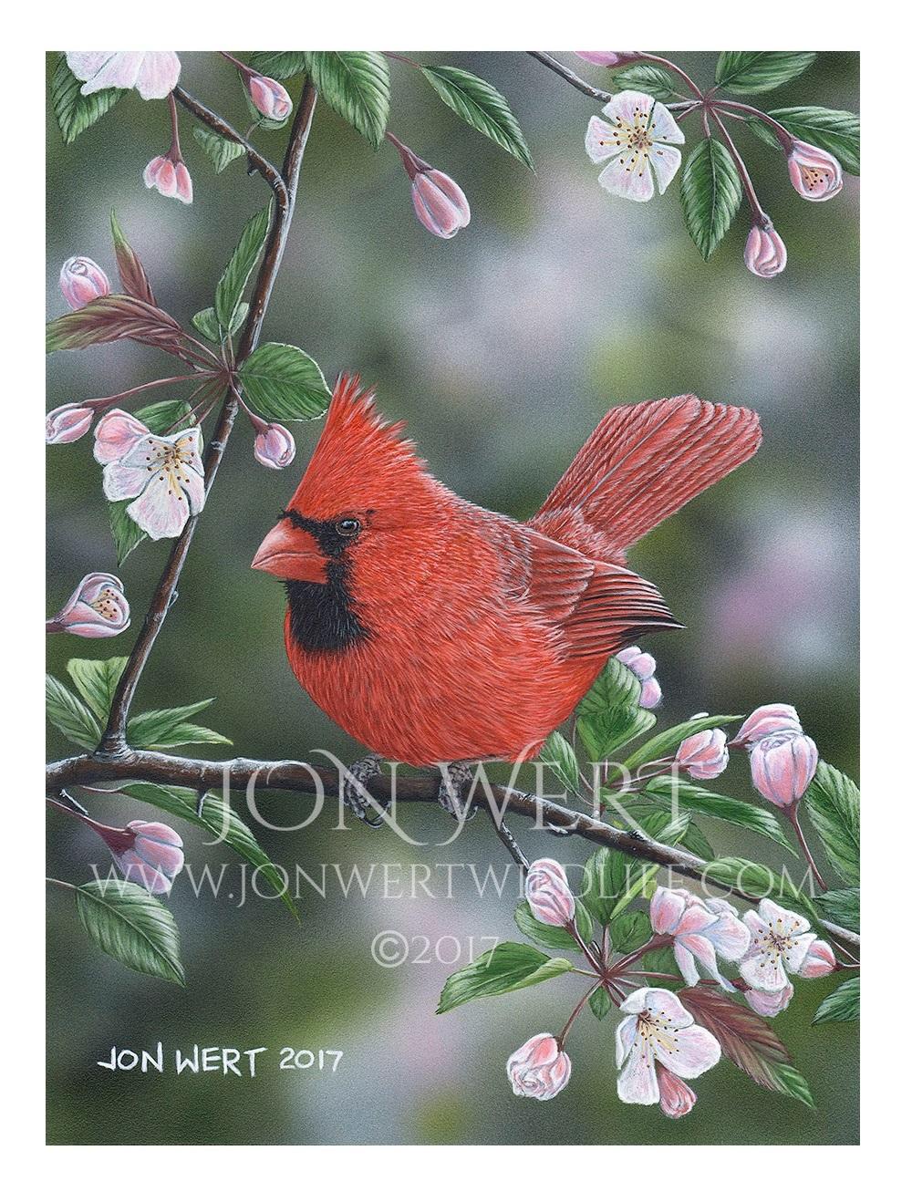Cardinal-893x1200px copy.jpg