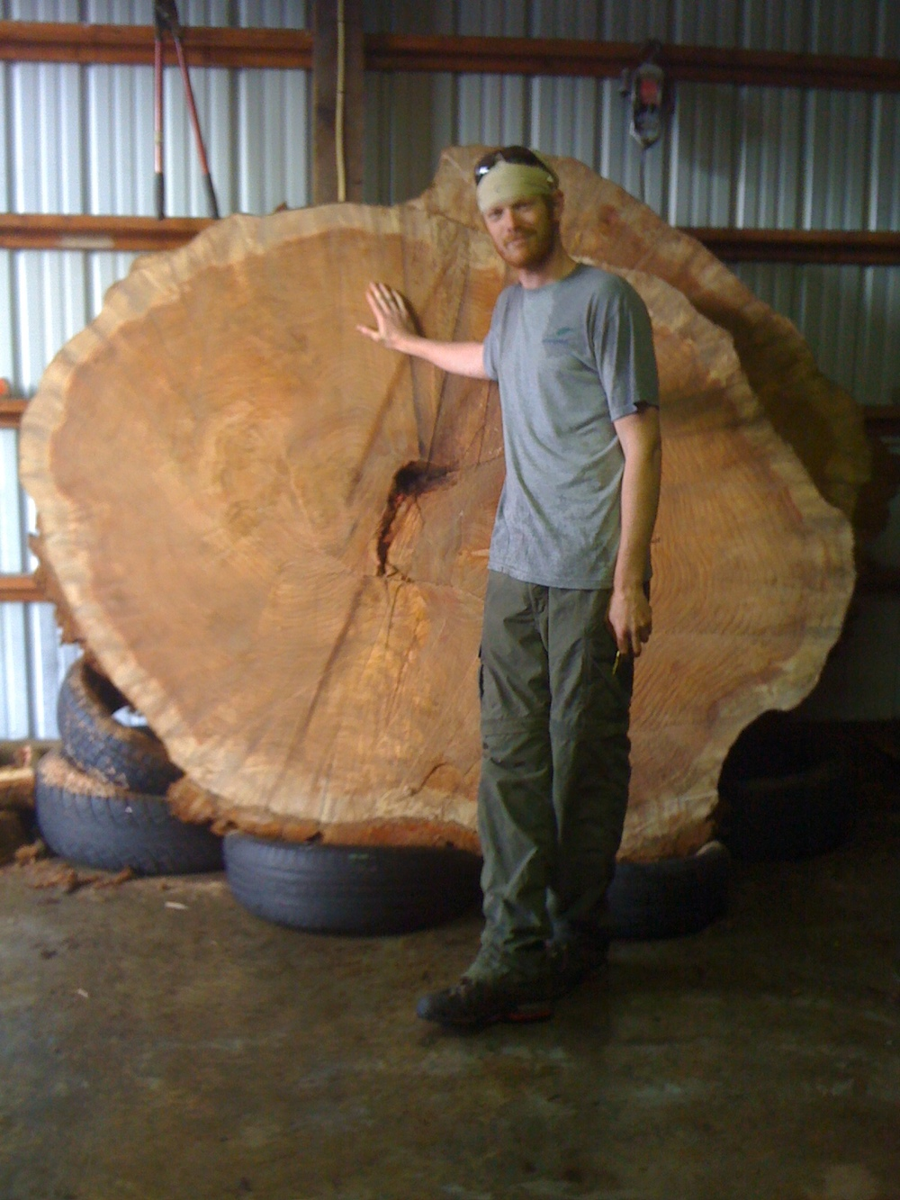 Huge Sequoia tree. This piece was cut from 20 feet up on the trunk. Great Job guys on a tough project!