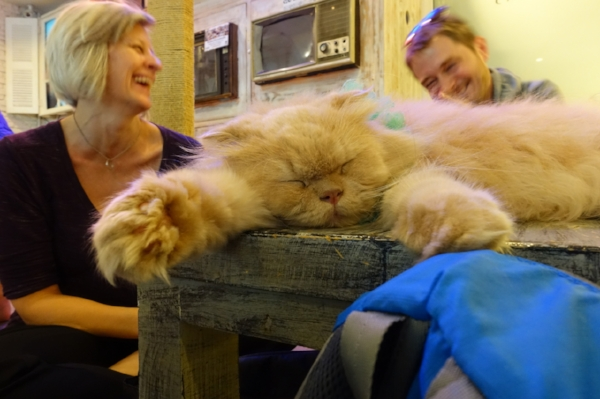 "One of Bangkok's fascinating ""cat cafes"" where you can get coffee with lots of cats!"
