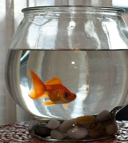 hate traveling alone request a goldfish