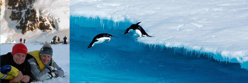 Penguins diving off the ice