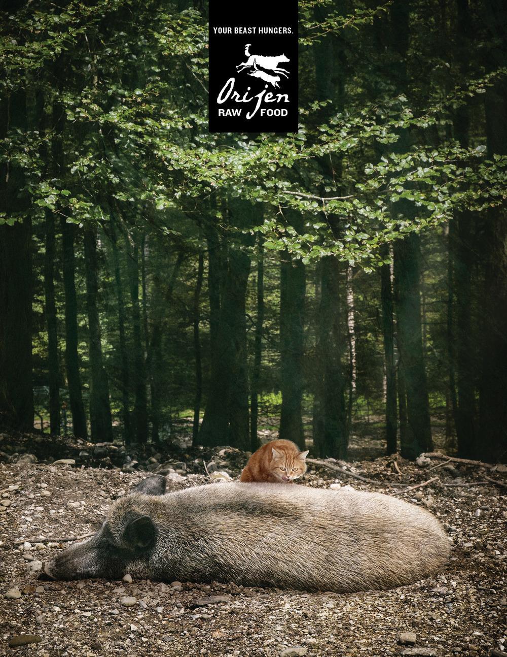 Orijen Cat Magazine.jpg