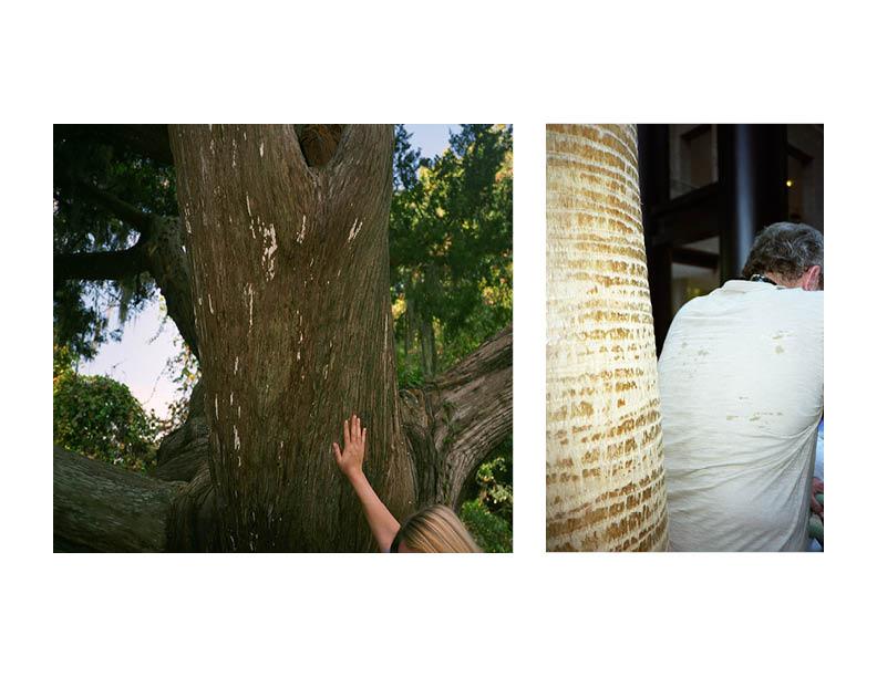 SWEATAND TREES.jpg
