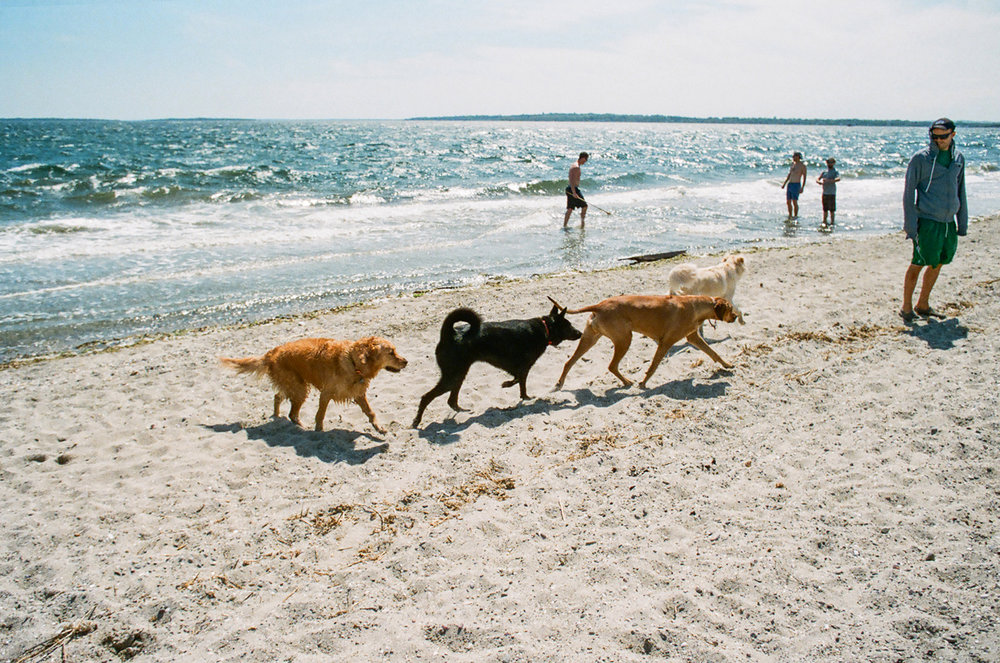 dogsonbeach_upload.jpg