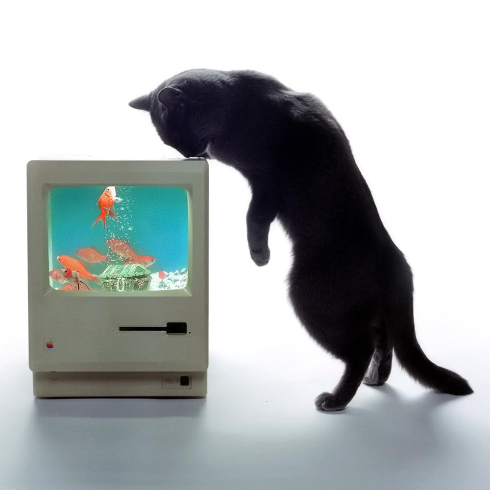 Mac fish tank w/Toto