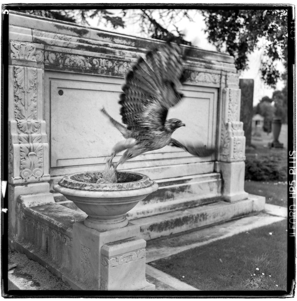 Eternal bird bath - Evergreen Cemetery Colma, CA