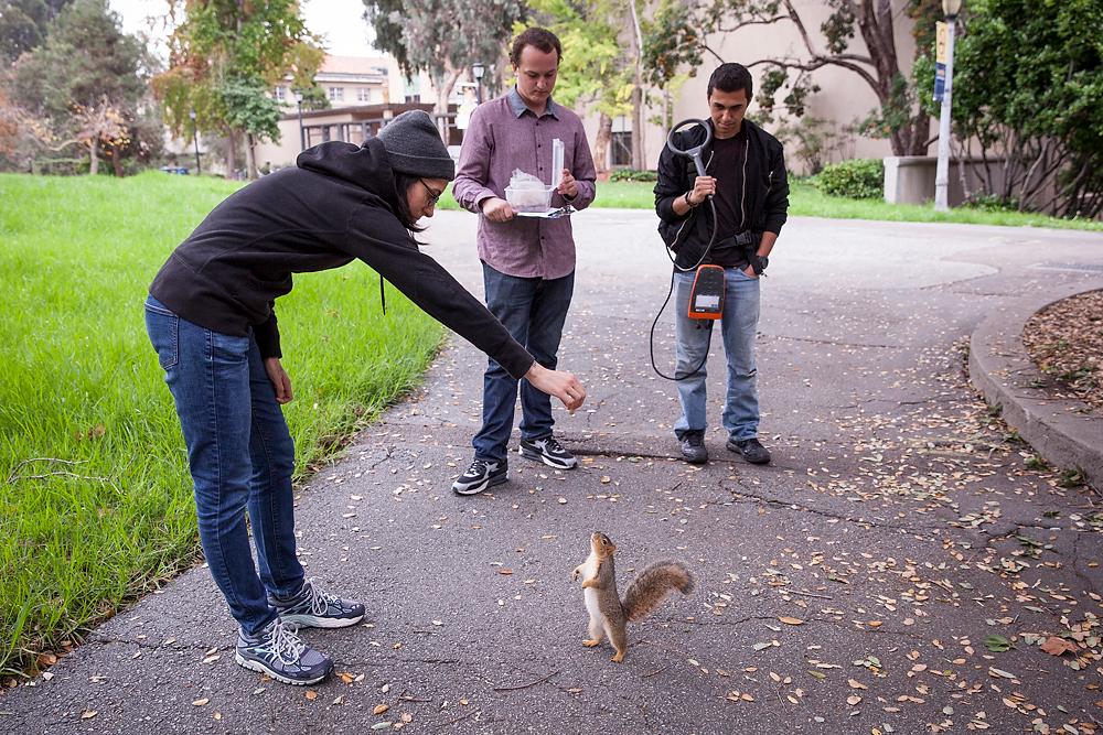 2491266_la-me-uc-berkeley-squirrels-dasilva_04.jpg