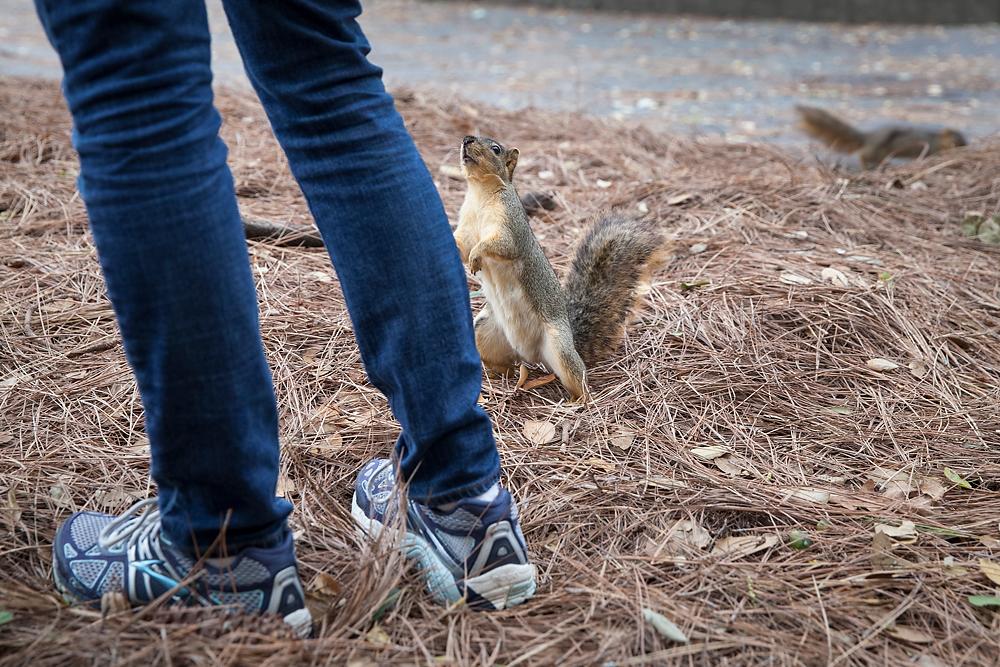 2491266_la-me-uc-berkeley-squirrels-dasilva_05.jpg