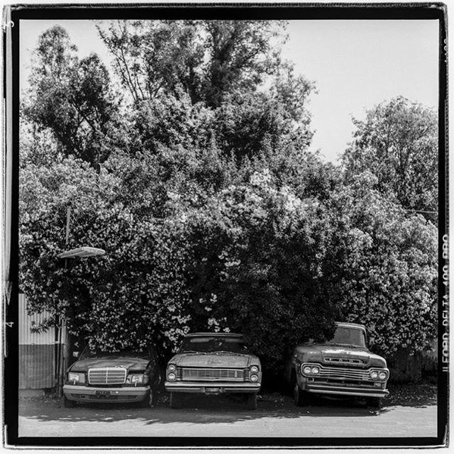 "LIFE SQUARED - ""overtaken"" © 2018 Peter DaSilva. #mothernature #overgrowth #classic #cars #hiddenpast #mercedes #ford #120 #ilford #delta400pro #bw #film #fullframe  #rolleiflex #telef4 #filmisnotdead #filmlover #6x6 #analog #nophotoshop #filmphotographer #pdsphoto #peterdasilva #analogueposse"