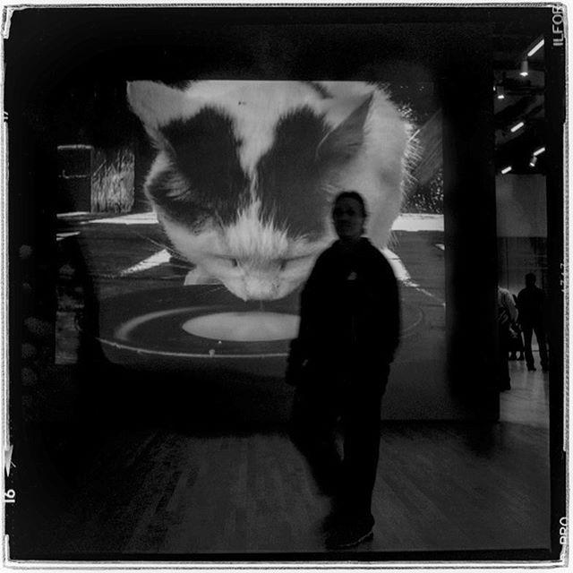 "LIFE SQUARED - ""milk bowl"" © 2018 Peter DaSilva. #cat #milkbowl #projection #sfmoma #art #120 #ilford #delta400pro #bw #film #fullframe  #rolleiflex #35e3 #filmisnotdead #filmlover #6x6 #analog #nophotoshop #filmphotographer #pdsphoto #peterdasilva #analogueposse"