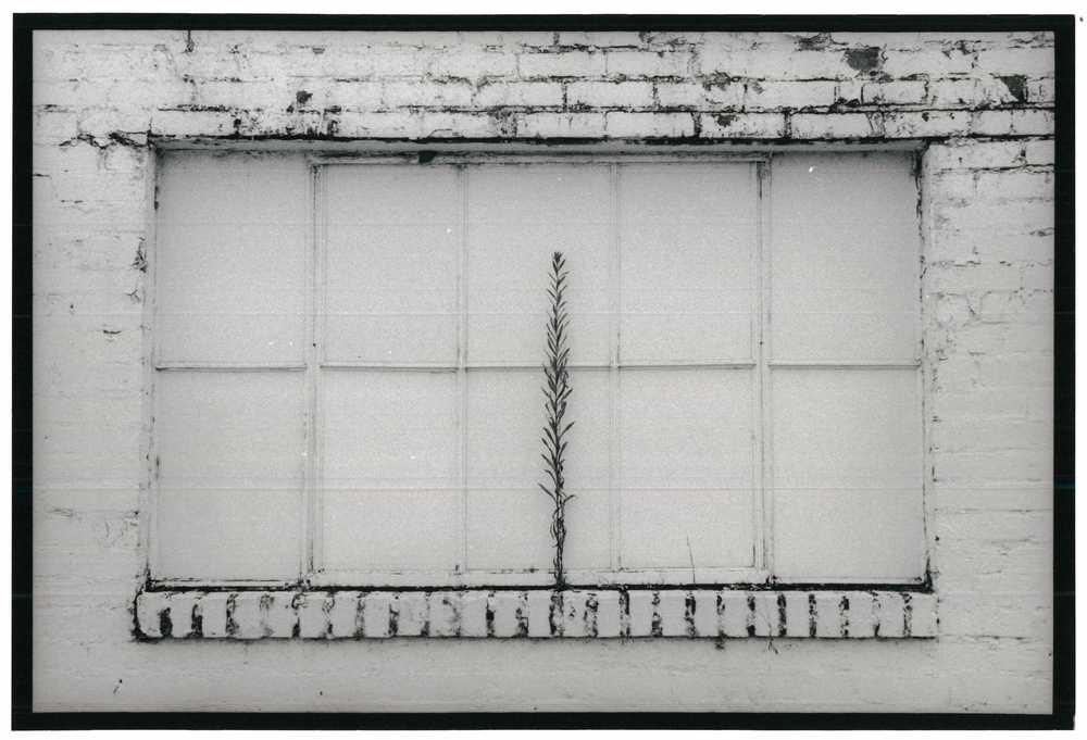 Window Plant 2