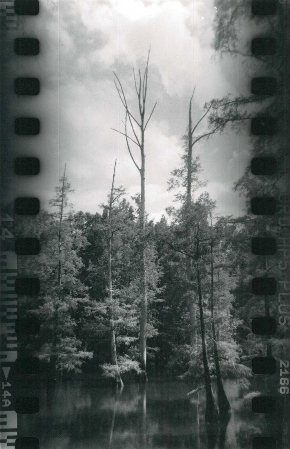 Ilford HP5 Plus film on Ilford silver gelatin paper