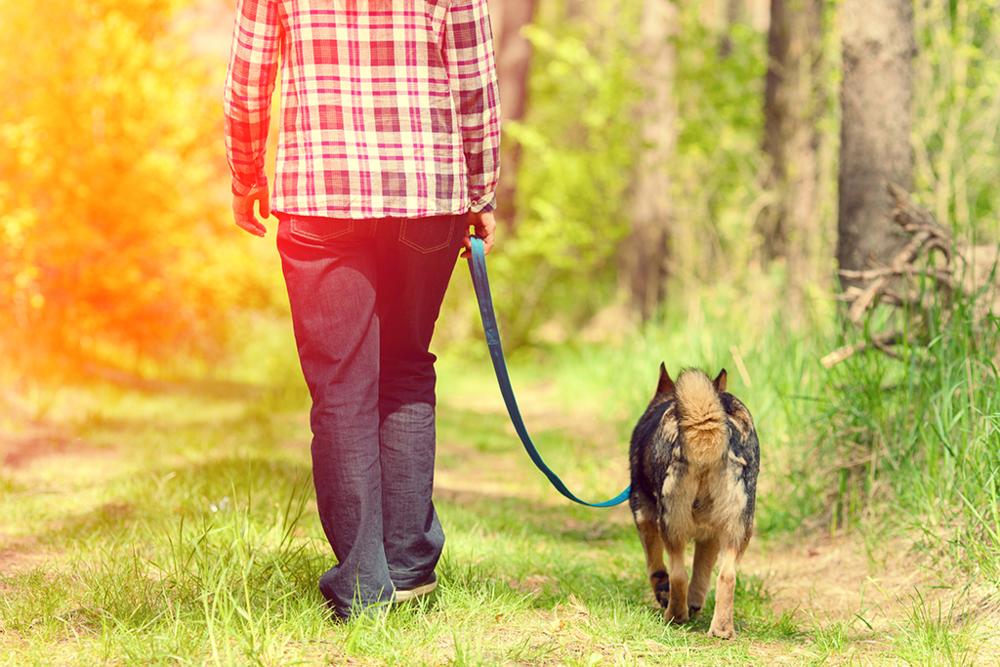 dog-on-leash-training.jpg