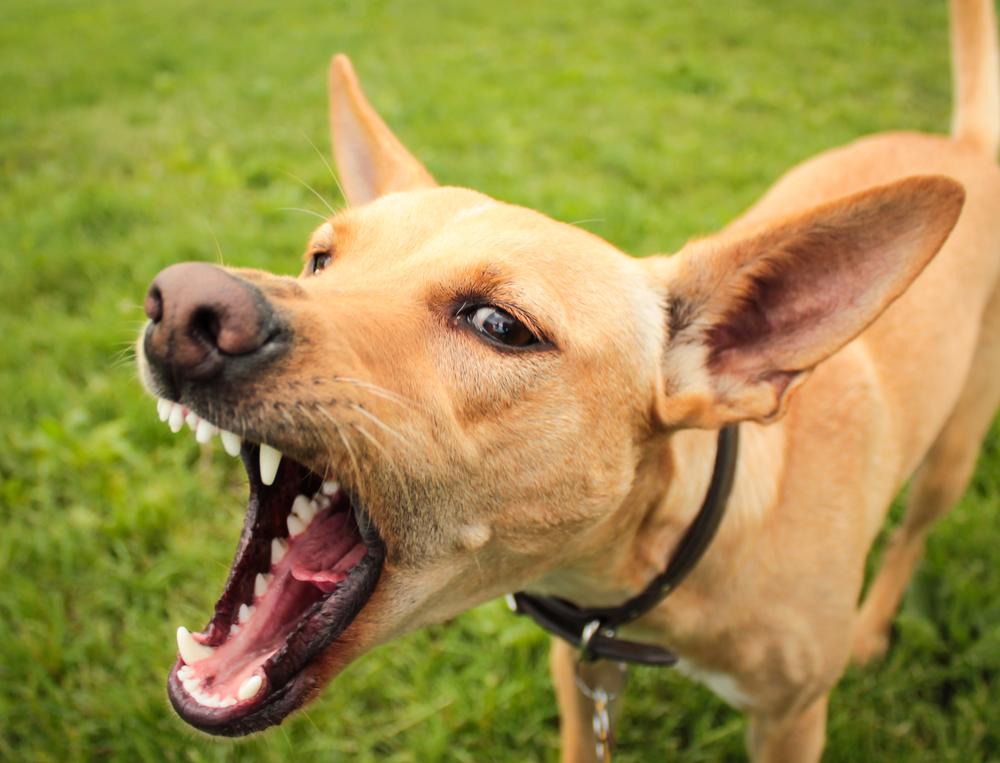dog-barking-behavior-classes.jpeg
