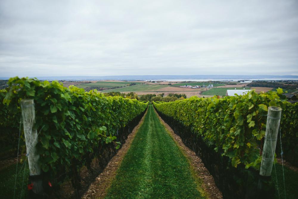 luckett vineyards photos