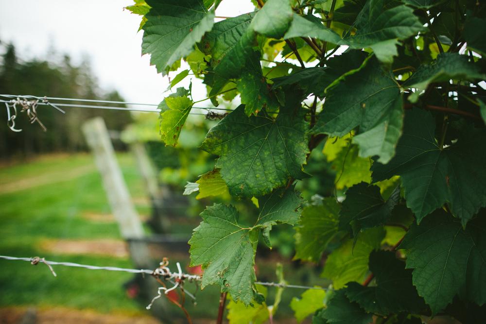 luckett vineyards