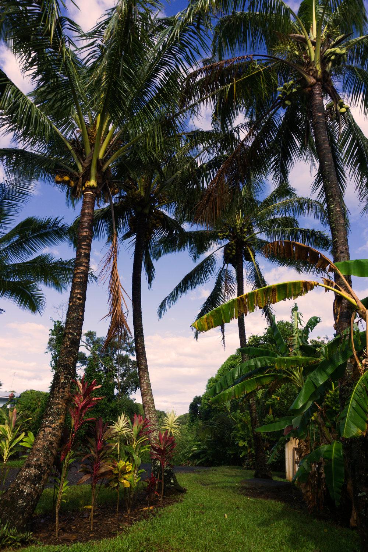AstroBandit_Maui_Hawaii_JordanRose_NorthShore_1.jpg