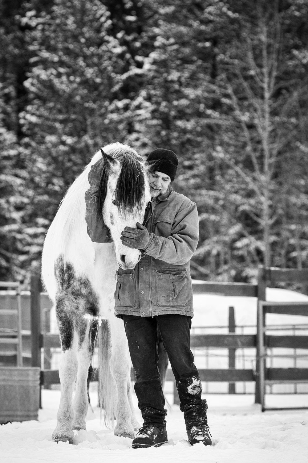 Man and horse connection