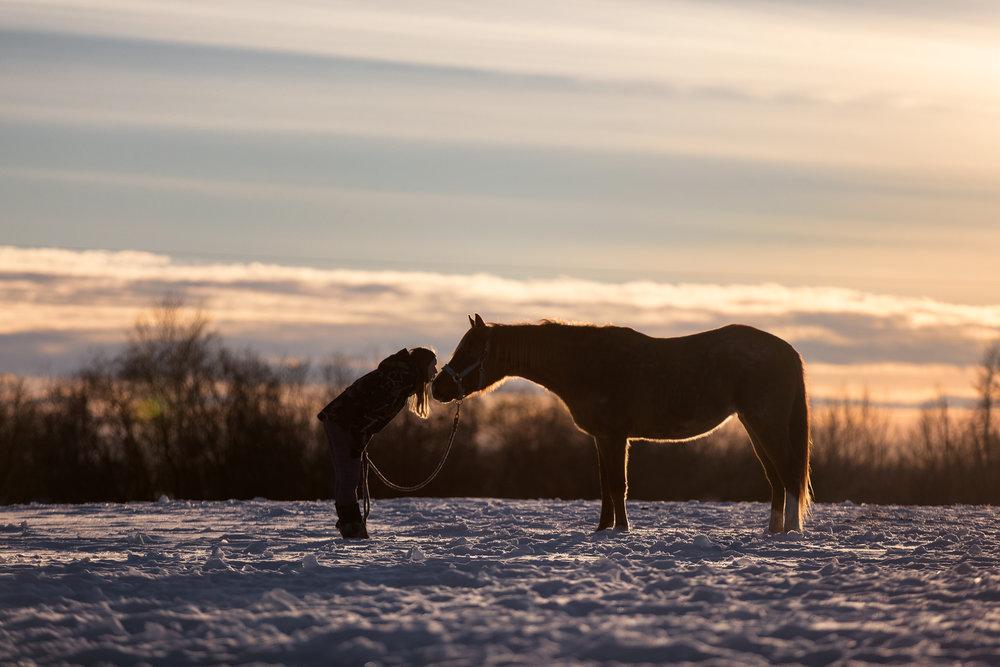 Sunset horse kiss