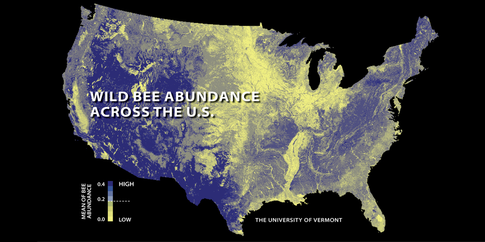 The first national study to map US wild bees suggests they're disappearing in many of the country's most important farmlands, including California's Central Valley, the Midwest's corn belt, and the Mississippi River valley. (Relatively low abundances are shown here in yellow; higher abundances in blue.) If losses of these crucial pollinators continue, the new nationwide assessment indicates that farmers will face increasing costs, and that the problem may even destabilize the nation's crop production. The findings were published Dec. 21, 2015, in the Proceedings of the National Academy of Sciences and led by scientists at the University of Vermont's Gund Institute for Ecological Economics.