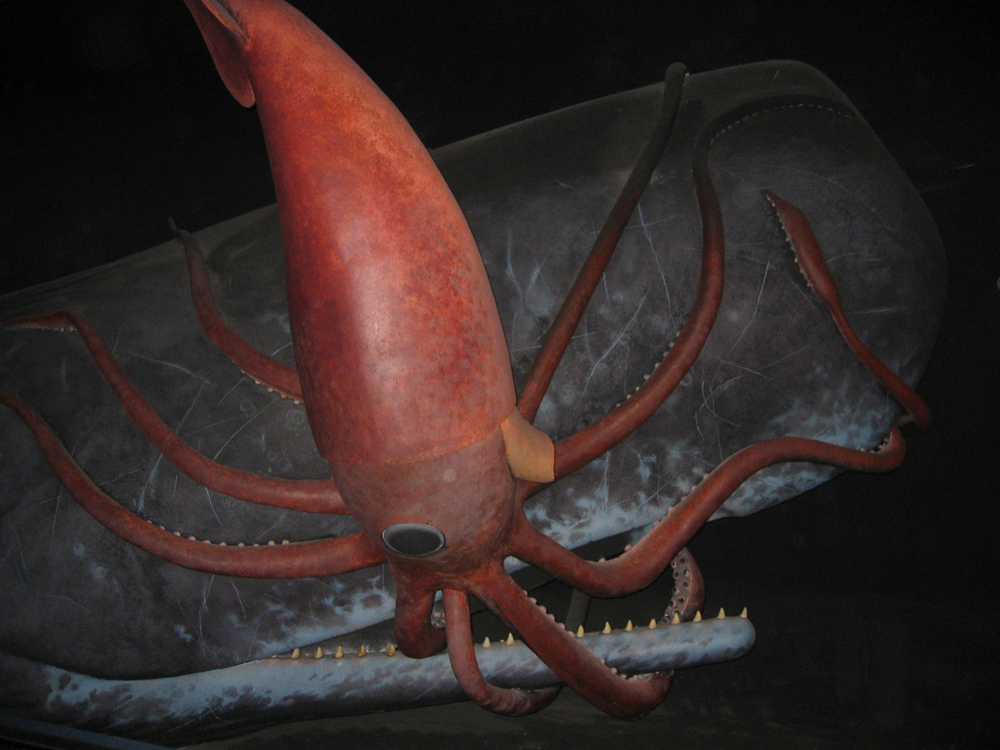 Reconstruction of an epic battle between a giant squid and its nemesis, the sperm whale - Image Credit: American Museum of Natural History.
