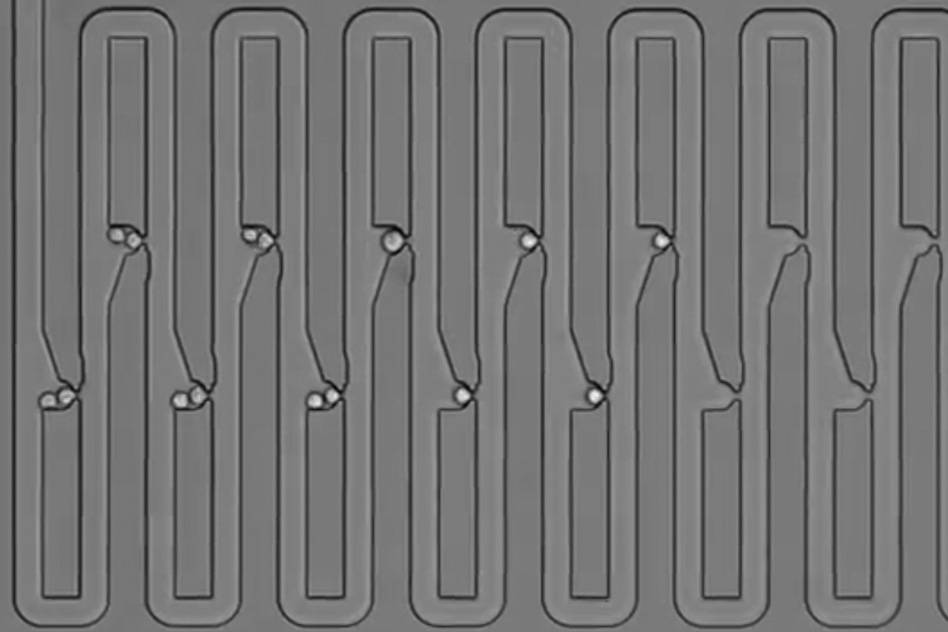 To track the family history for a single cell, researchers engineered a microfluidic device that traps first an individual cell and then all of its descendants. The device has several connected channels, each of which has a trapping pocket used to capture single cells in precise locations. After the initial cell grows and divides, its progeny float downstream and are captured in the next available trap. Through this process of dividing and trapping, researchers were able to track where single cells traveled after division and to determine lineage relationships for multiple generations - Image Credit: MIT