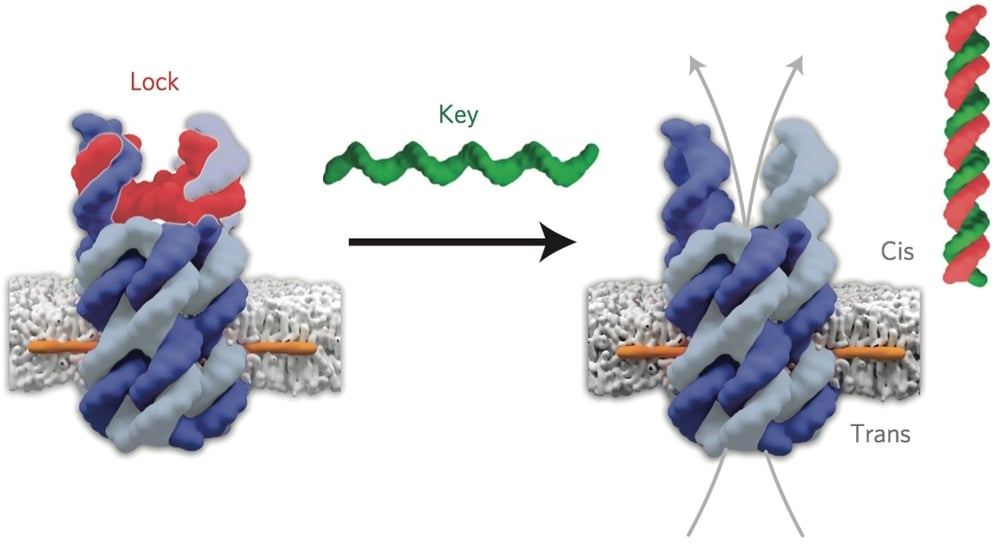 Lock and key mechanism - Image Credit DR Stefan Howorka and Dr Jonathan Burns, UCL