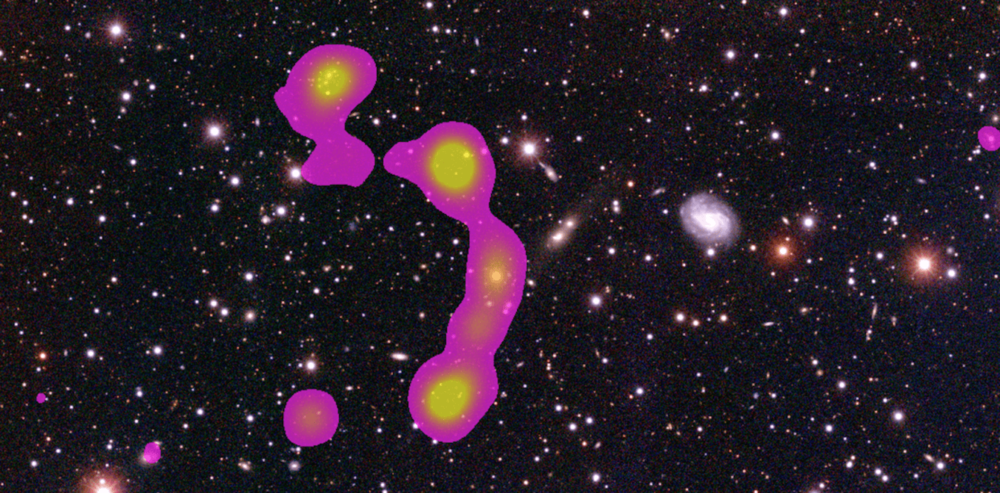 "The new discovery: The C-shaped ""wide angle tail galaxy"" (pink) surrounded by the galaxies of the Matorny-Terentev cluster (white). Julie Banfield, Author provided"